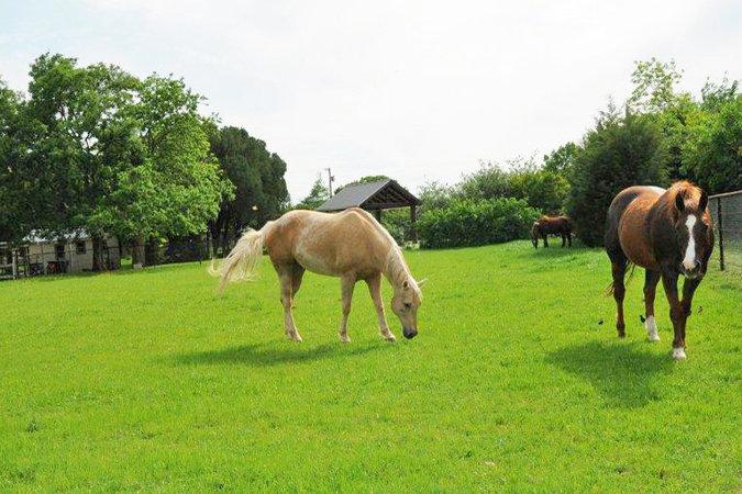 6831Fisher_horses