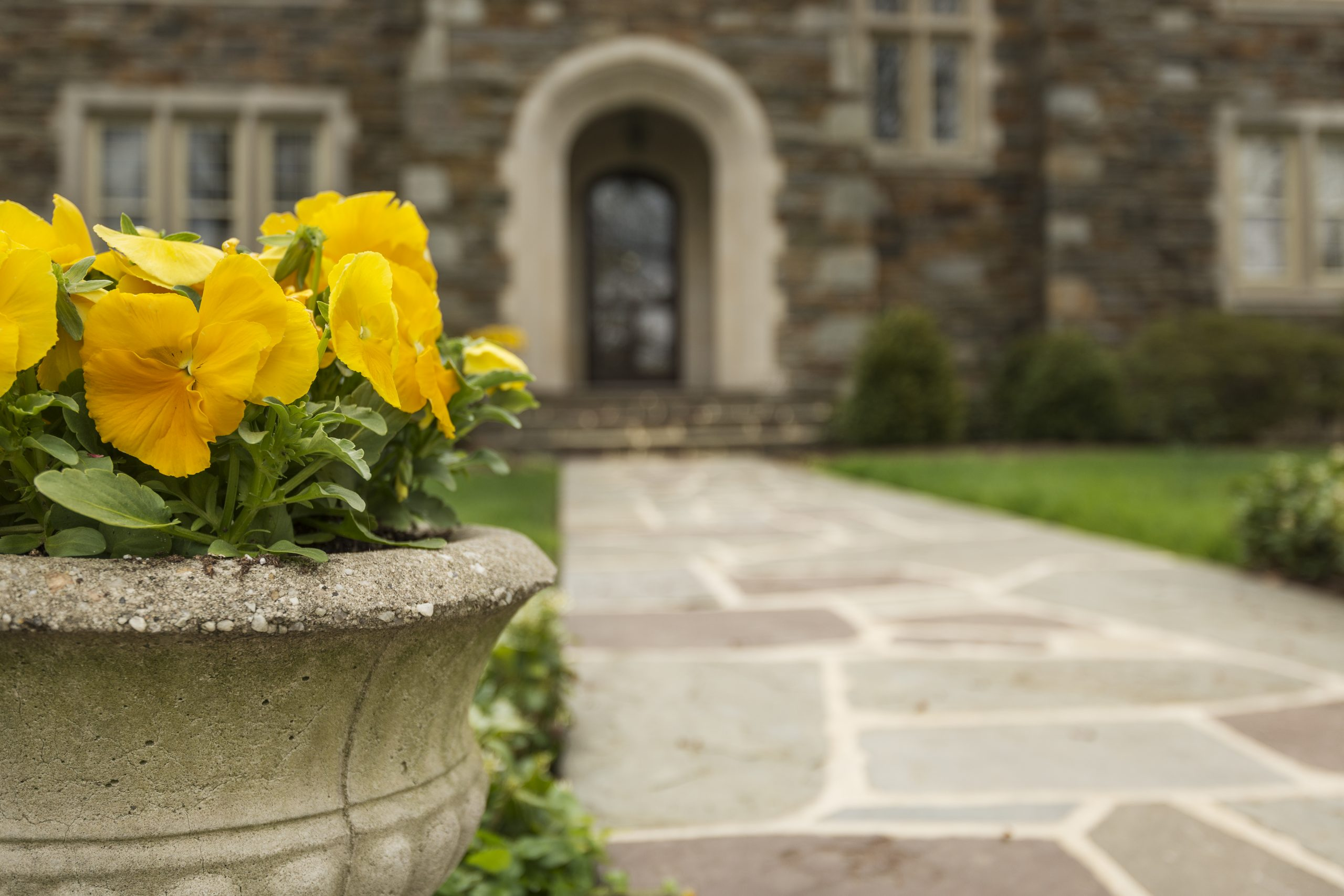 Yellow Pansies in Front of a Stone Mansion